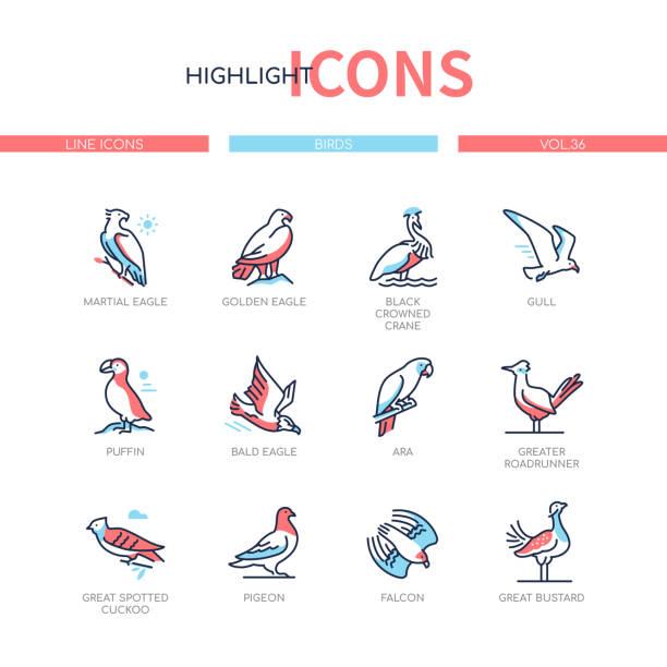Bird species - modern line design style icons set vector art illustration