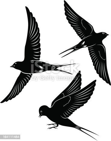 istock bird swallow 164111484