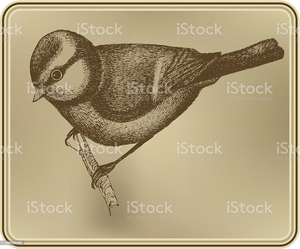 Bird titmouse, hand drawing. Vector illustration royalty-free stock vector art