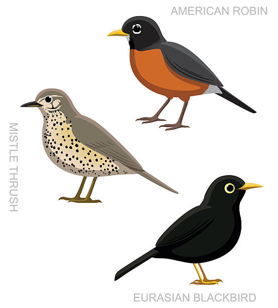 bird wahre singdrossel cartoon-vektor-illustration-set - rotkehlchen stock-grafiken, -clipart, -cartoons und -symbole