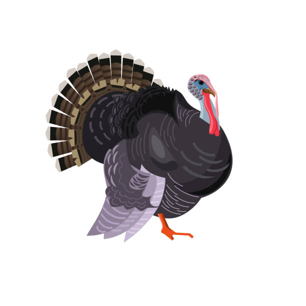 Bird turkey vector Bird turkey. Vector picture isolated on white background,side view image bird clipart stock illustrations