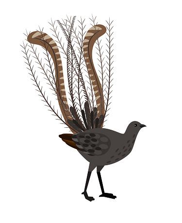 Bird with long feathers. Cartoon beautiful ornithology character, exotic flying animal