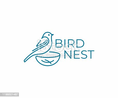 Bird with nest design. Bird watching vector design. Birding illustration