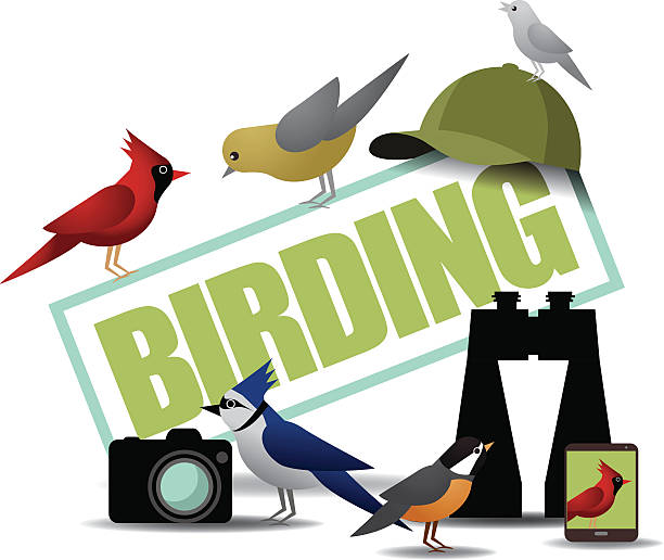 Birding icon with binoculars camera and smartphone vector art illustration