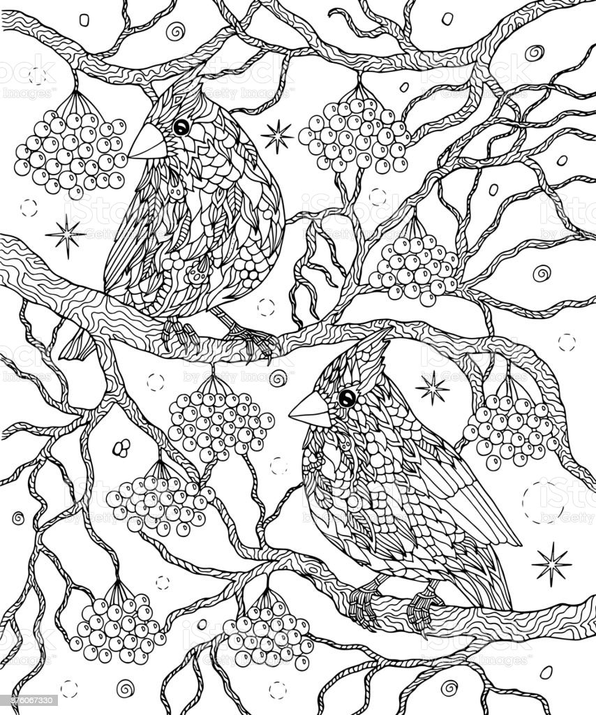 Birds And Berries For Coloring Page Northern Cardinals Stock ...