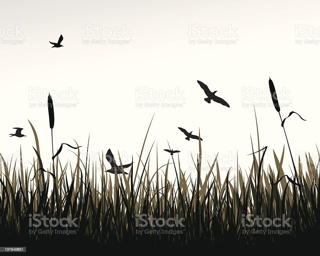 Birds and reed vector art illustration