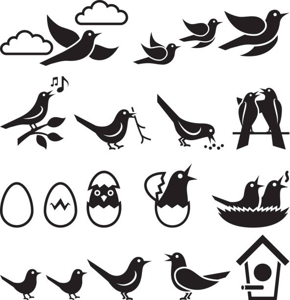 Birds black and white royalty free vector icon set Birds black and white icon set songbird stock illustrations