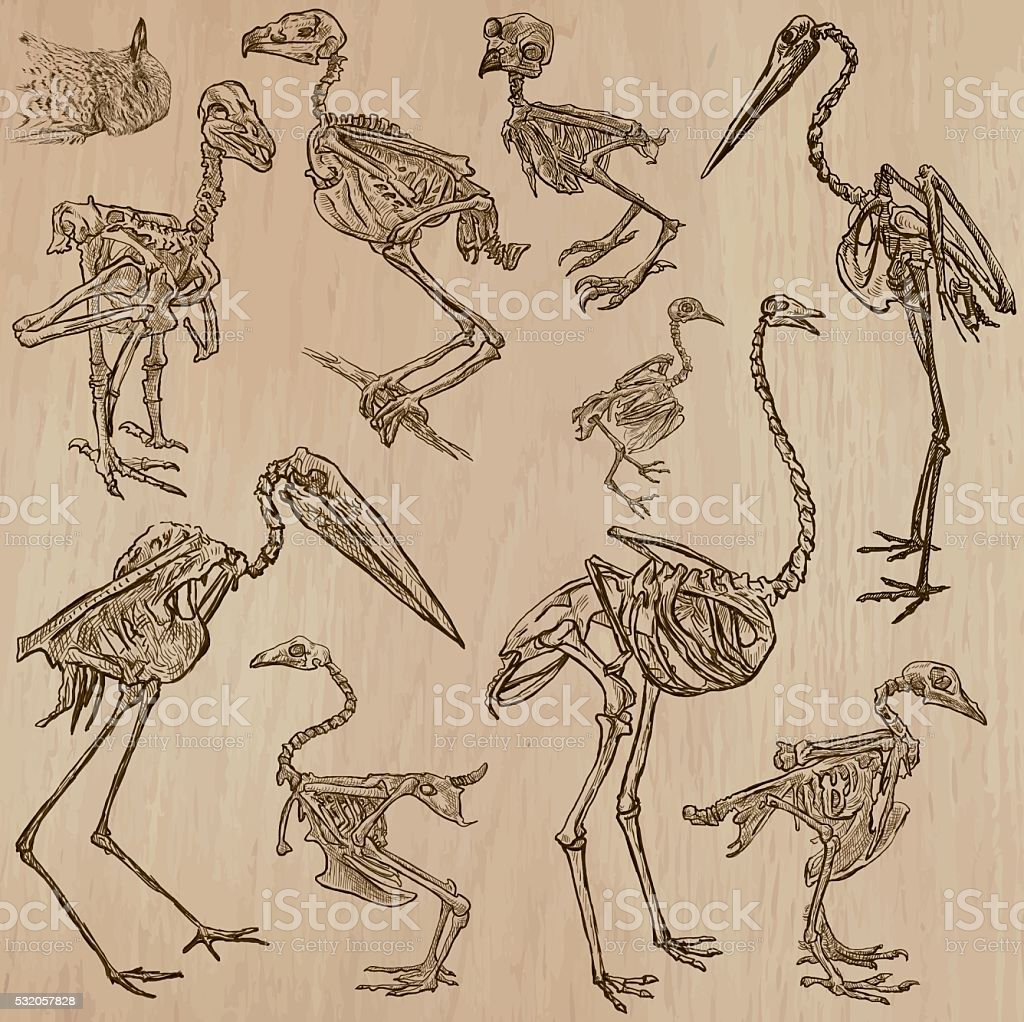 Birds Bones, Skeletons - freehands, vector vector art illustration