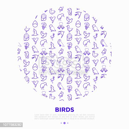 Birds concept in circle with thin line icons: dove, owl, penguin, sparrow, swallow, kiwi, parrot, eagle, humming bird, pink flamingo. Modern vector illustration, print media template.