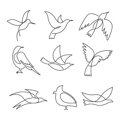 Birds continuous line drawing elements set.