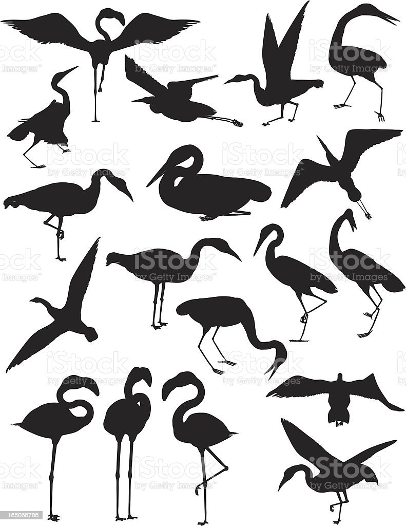Birds: Cranes, Egrets, and Flamingoes vector art illustration