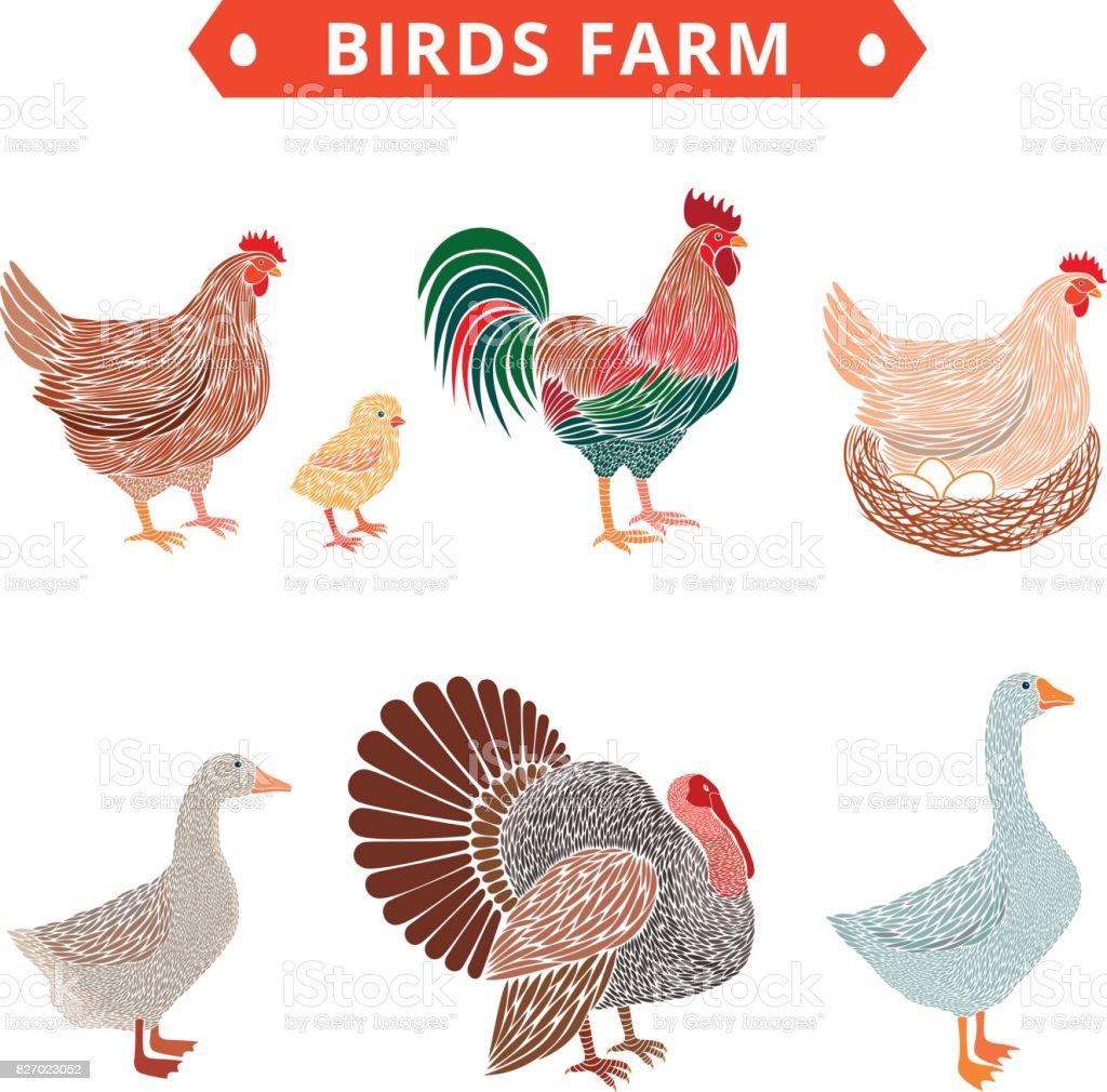 Birds farm. Poultry birds: duck, rooster, chick, goose,hen, turkey. vector art illustration
