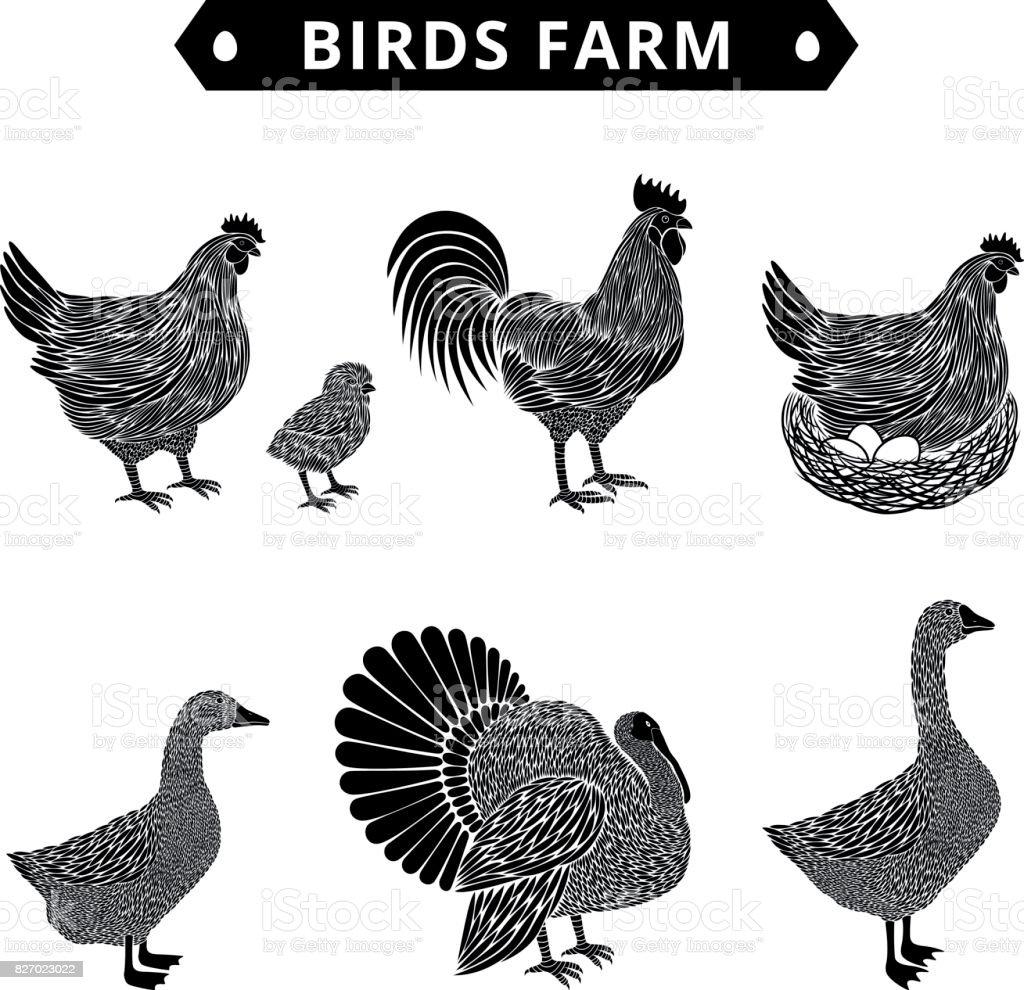 Birds farm silhouette. Poultry birds: duck, rooster, chick, goose,hen, turkey. vector art illustration
