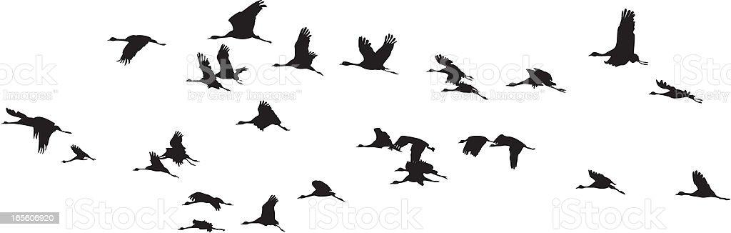 Birds Group :: Balck and white vector art illustration