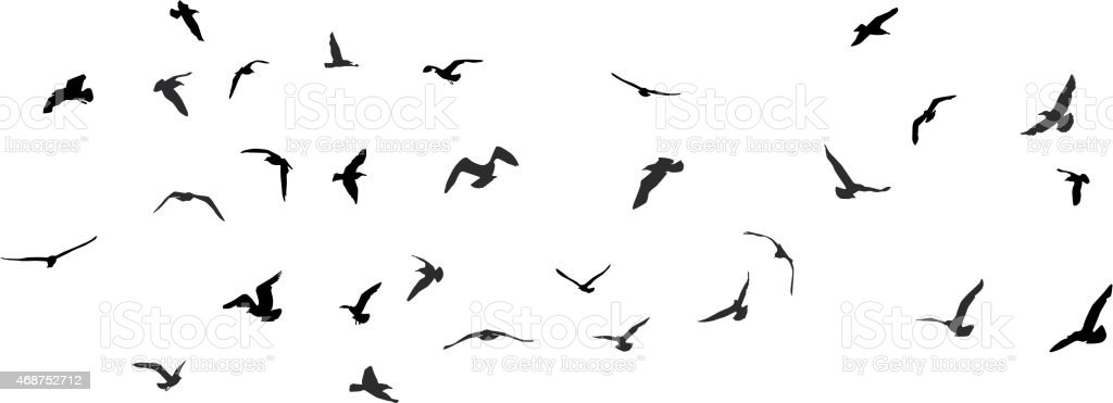 Birds, gulls, black silhouette on white background. Vector vector art illustration