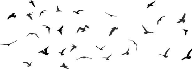 Birds, gulls, black silhouette on white background. Vector Birds, gulls, black silhouette on white background. Vector illustration flock of sheep stock illustrations