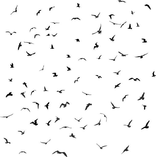 Birds, gulls, black silhouette on white background. Vector vector art illustration