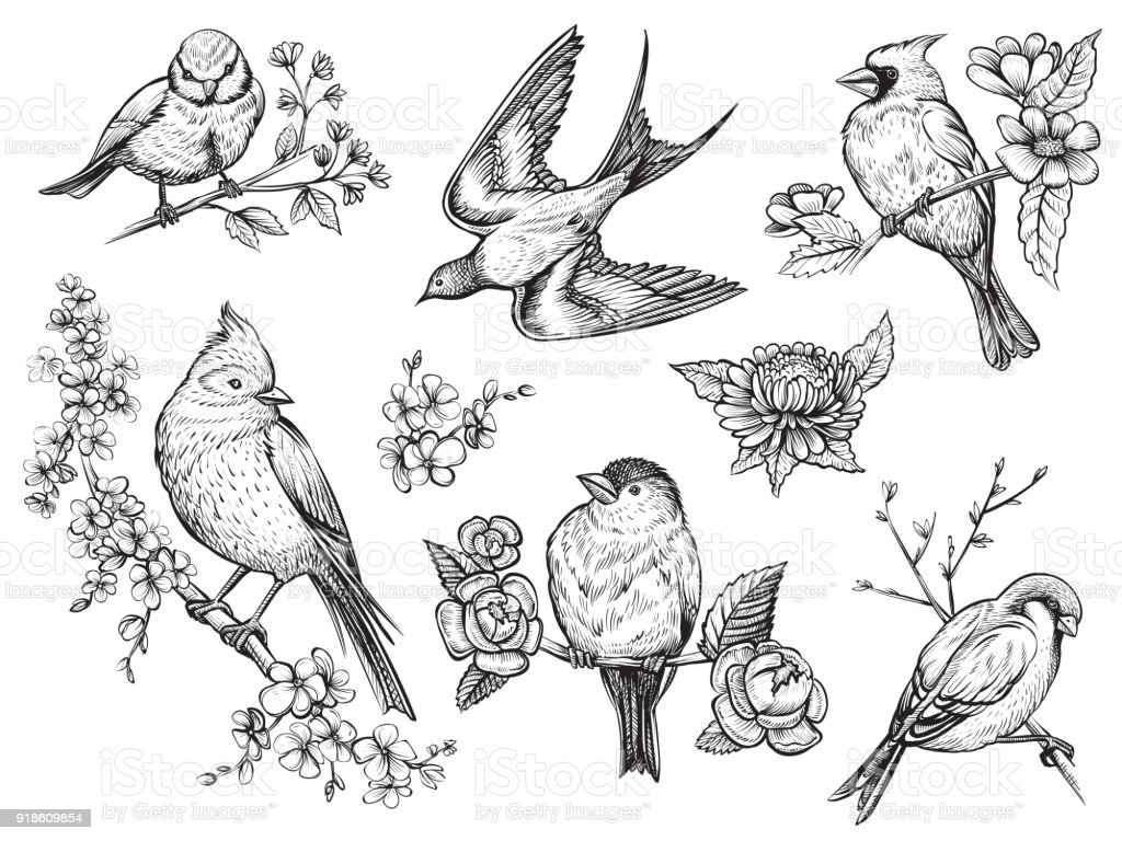 Birds hand drawn illuatrations in vintage style with spring blossom flowers. vector art illustration
