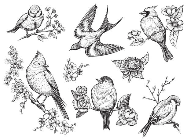 birds hand drawn illuatrations in vintage style with spring blossom flowers. - birds stock illustrations