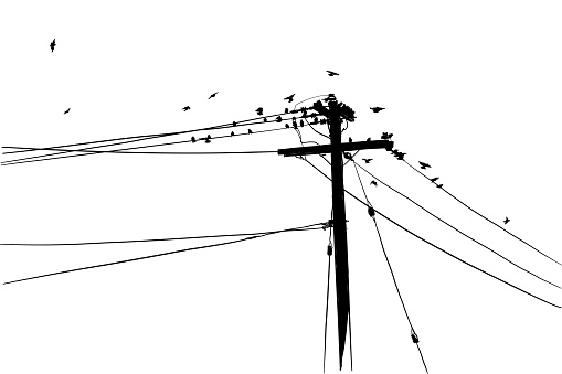 Birds Hangout Silhouette