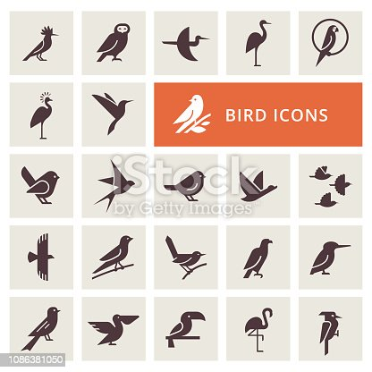 Vector birds icon set in gray color. Isolated items birds. Perfect for illustration, decoration and print.