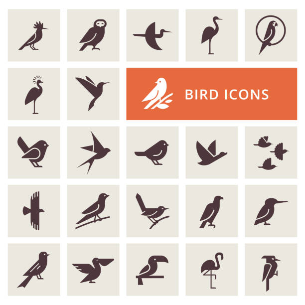 Birds icon set Vector birds icon set in gray color. Isolated items birds. Perfect for illustration, decoration and print. goose bird stock illustrations