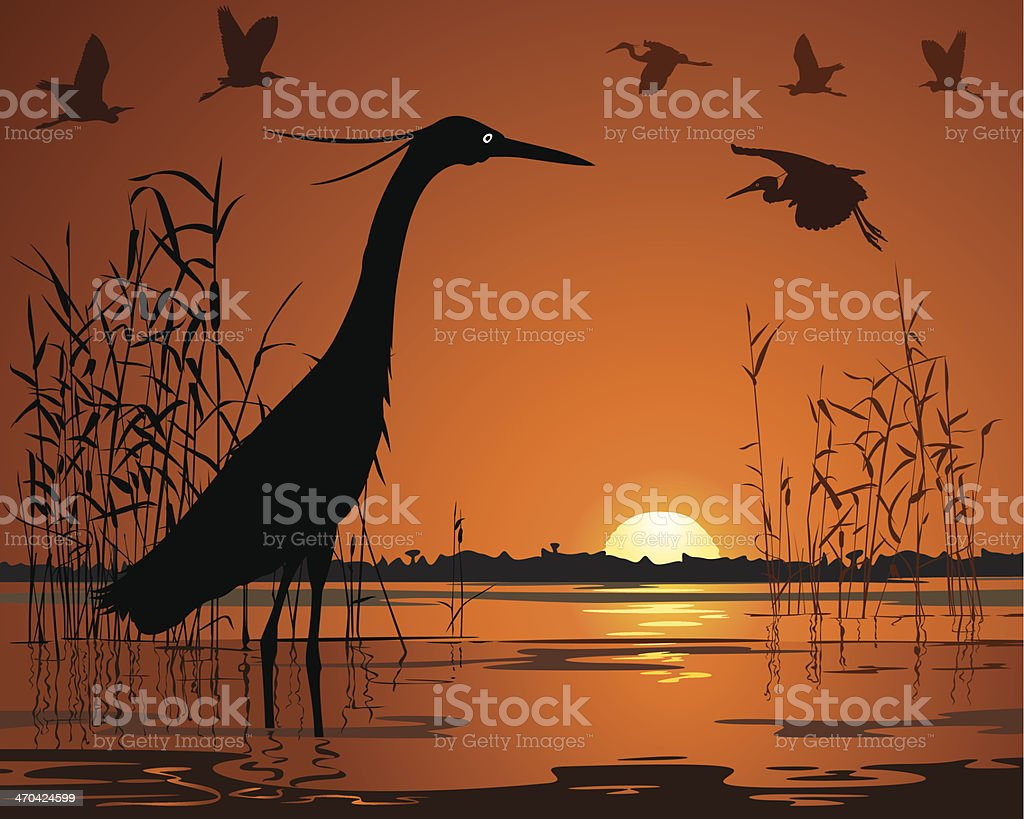 Birds in sunset swamp illustration vector art illustration