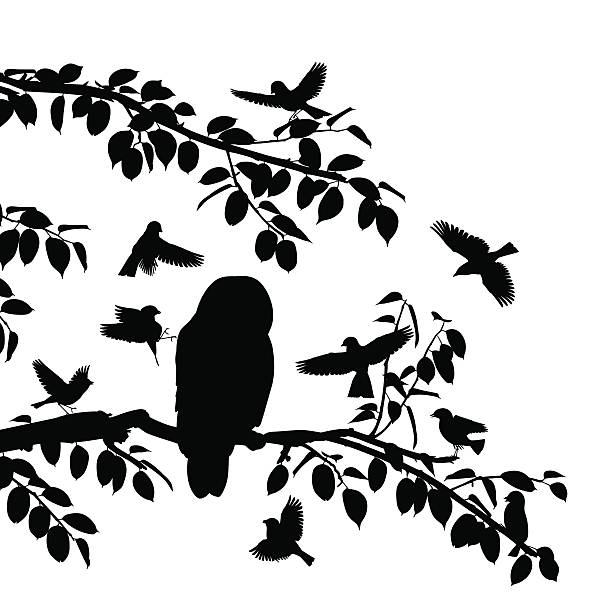 Birds mobbing owl vector art illustration