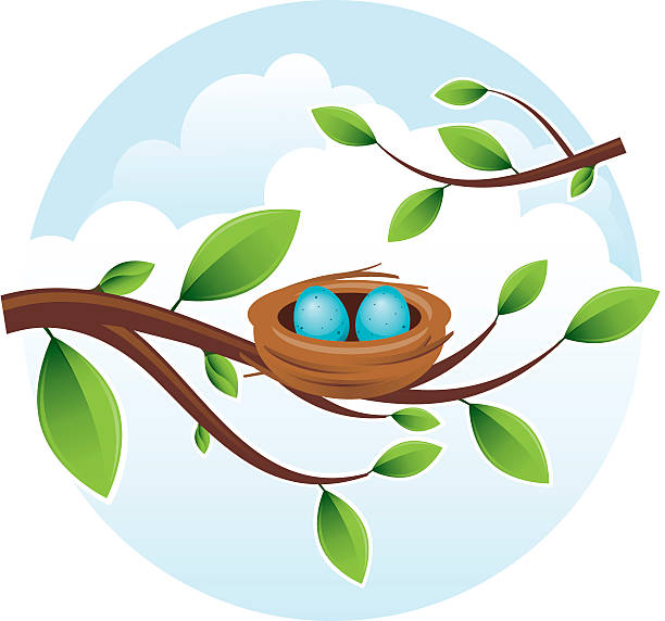 Bird's Nest with Eggs Bird's nest in tree. All colors are global. Gradients used. nest egg stock illustrations
