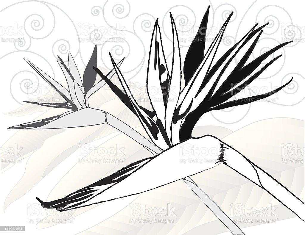 Birds of Paradise BW royalty-free stock vector art