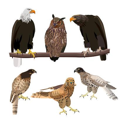 Birds of prey set