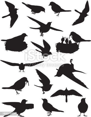 istock Birds of Spring 165073450