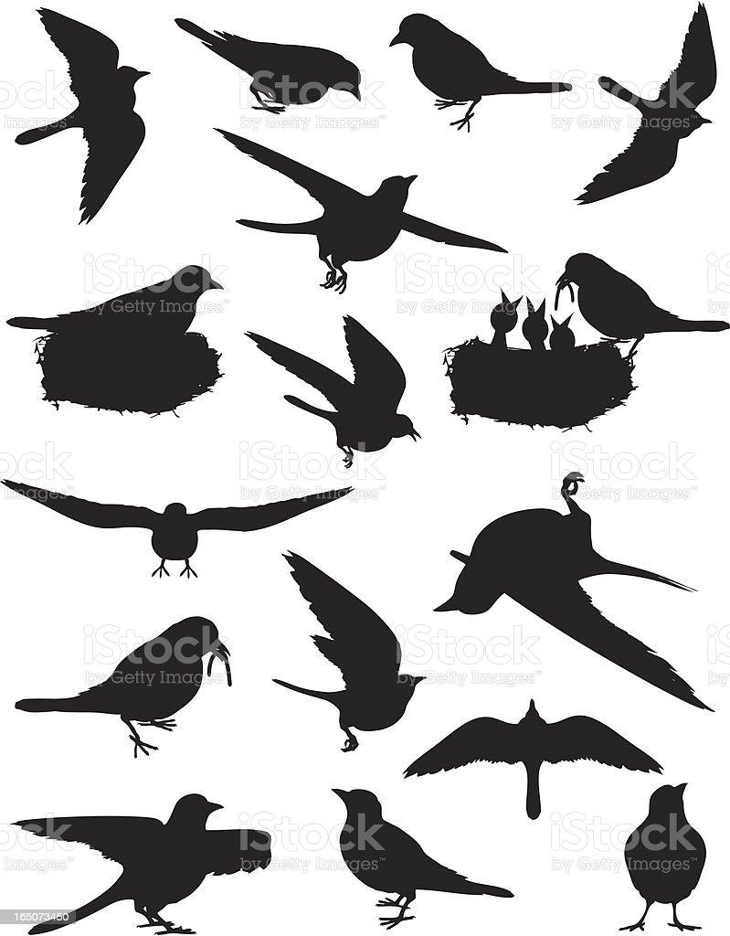 Birds of Spring vector art illustration