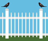 istock Birds on a Picket Fence 1306168190