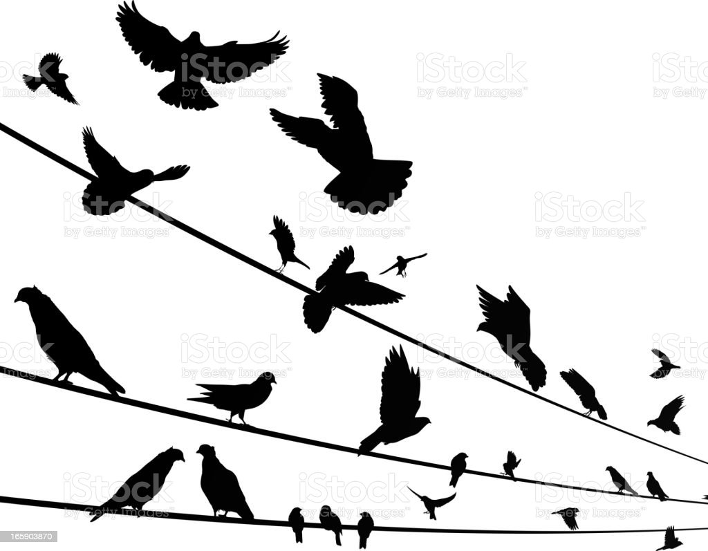 Birds on a wire vector art illustration