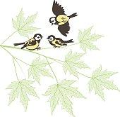 Birds on maple branch
