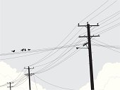 Birds on Powerlines