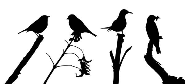 Birds on the branch silhouette set in vector vector art illustration