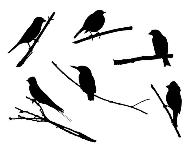 Birds on the branch silhouette set Birds on the branch silhouette set in vector. kingfisher stock illustrations