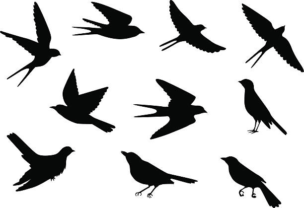 birds pattern Set of silhouettes of flying and sitting birds bird clipart stock illustrations