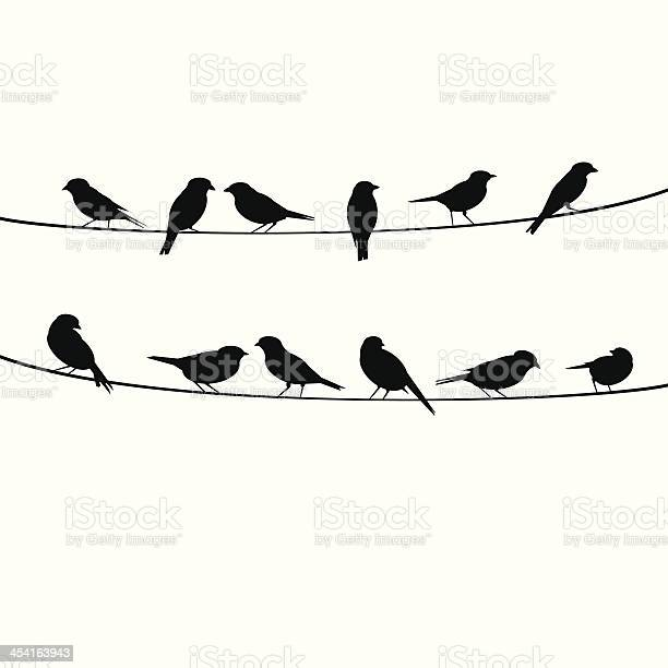 Birds resting on wire vector id454163943?b=1&k=6&m=454163943&s=612x612&h=6zm3vvwg5rzwr1hp hewy7iv9i dukt5y1uhscm0vgc=