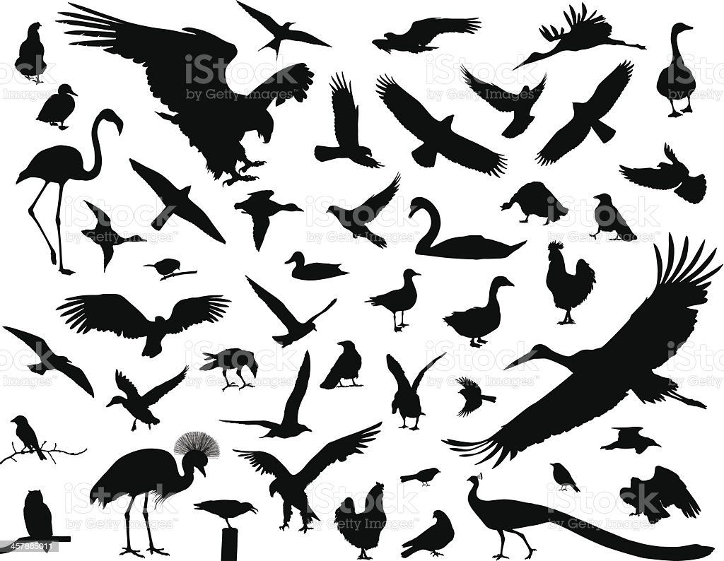 Birds set vector art illustration
