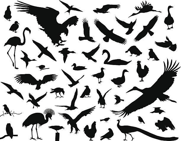stockillustraties, clipart, cartoons en iconen met birds set - kaal geschoren hoofd