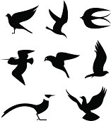 Vector Illustrations of Birds icons (eps 8).