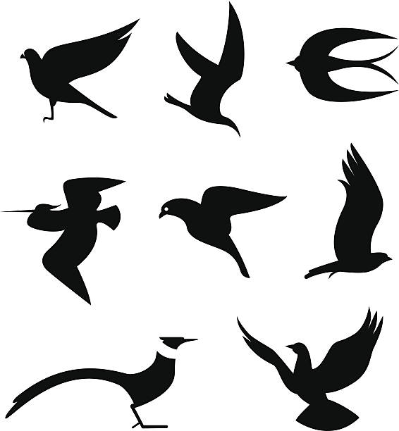 Birds Set Vector Illustrations of Birds icons (eps 8). loon bird stock illustrations