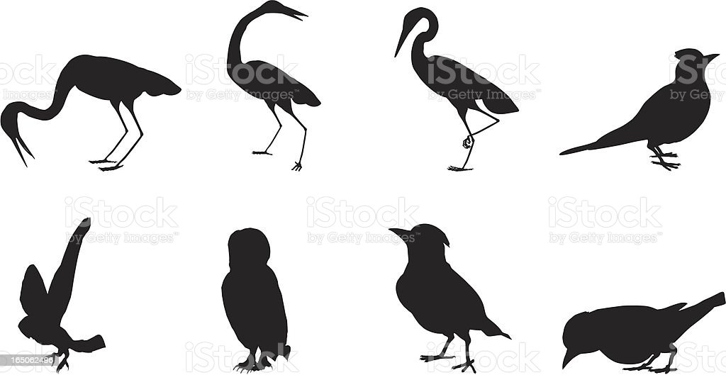 Birds Silhouette Collection vector art illustration