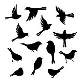 Birds silhouette collection. Vector design elements