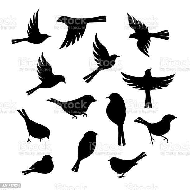 Birds silhouette collection vector id894862924?b=1&k=6&m=894862924&s=612x612&h=m3hpjh53iuoohpsgxpqr0ulbqqchpotew4e9co029 o=