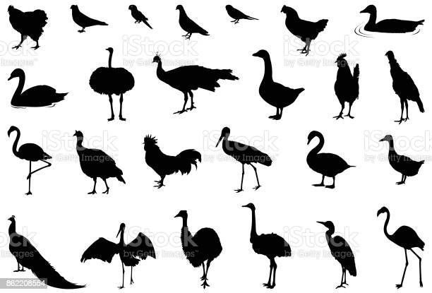 Free wild swan Images, Pictures, and Royalty-Free Stock
