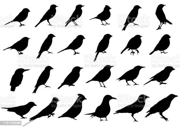 Birds silhouettes collection vector id1137408088?b=1&k=6&m=1137408088&s=612x612&h=hneewukutqcobnj2ikqvonfyibxlohxz k u0jwb3zk=